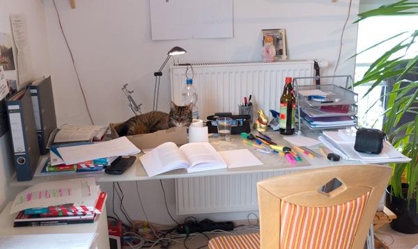 Meine Katze steht mir beim Lernen für das Abitur bei.